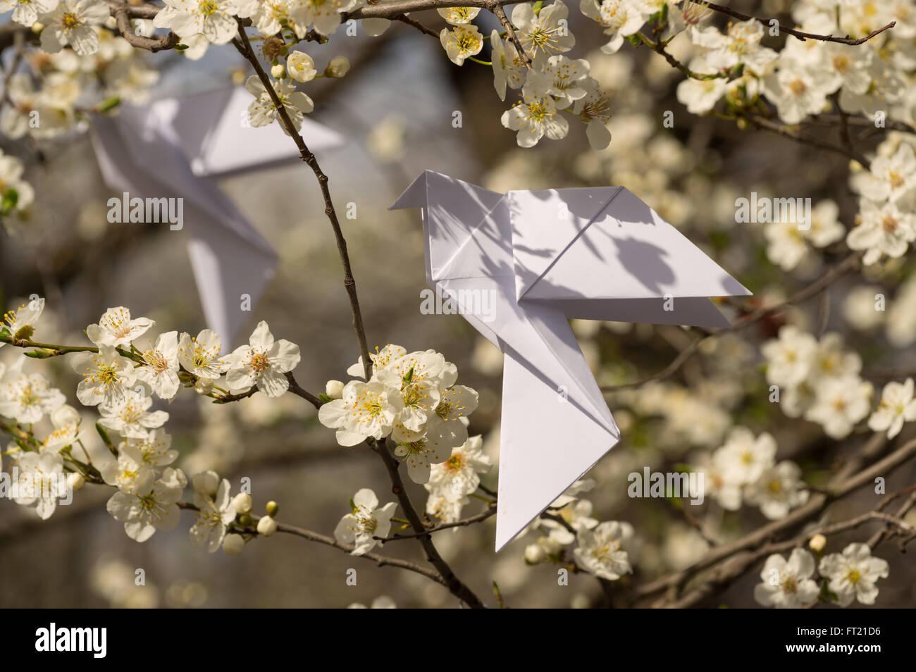 Weiße Origami Taube Vögel hängen blühender Frühling Pflaumenbaum Stockbild