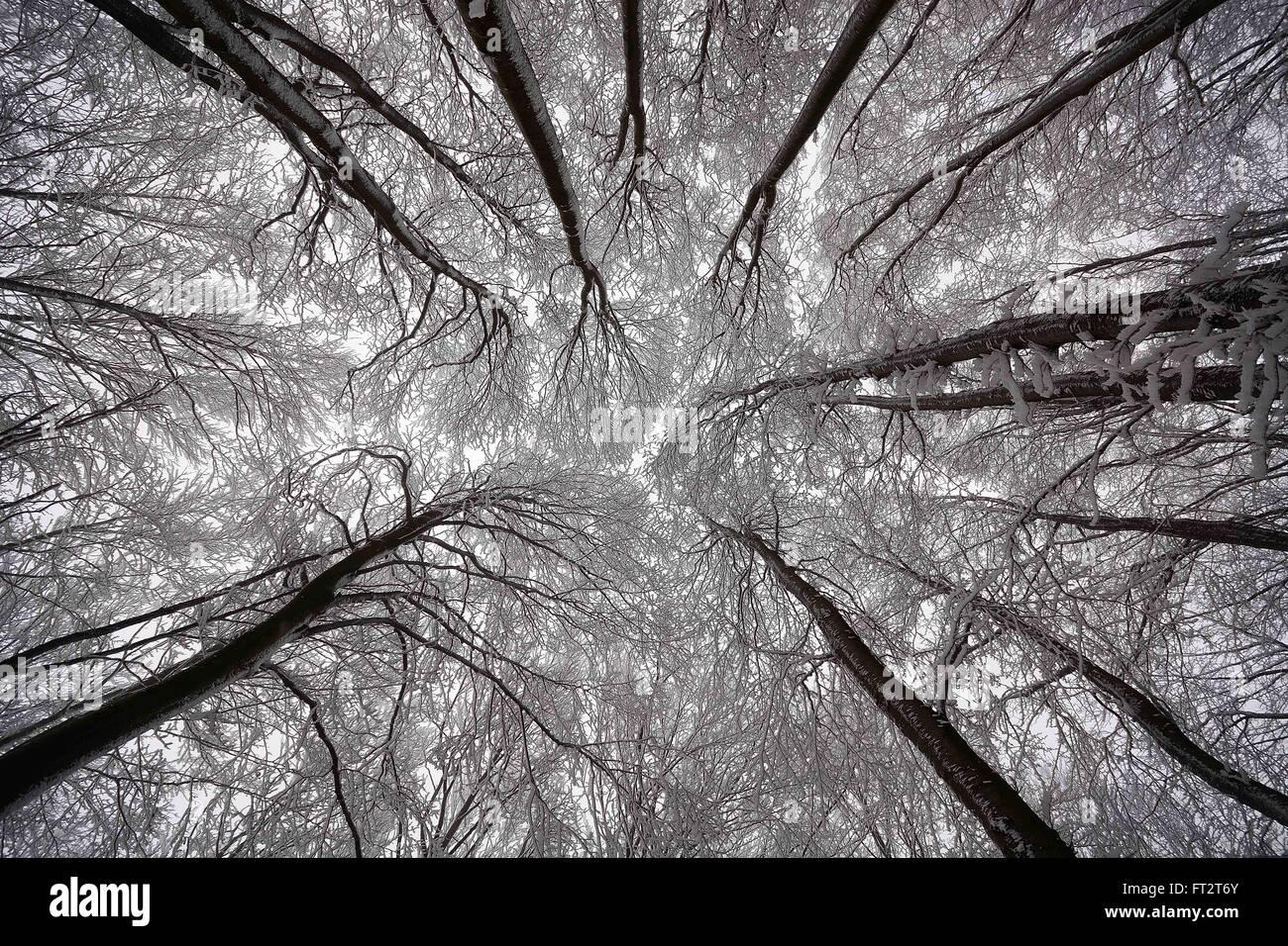 Synapsen - Schneebedeckte Bäume, die als Synapsen angezeigt Stockbild