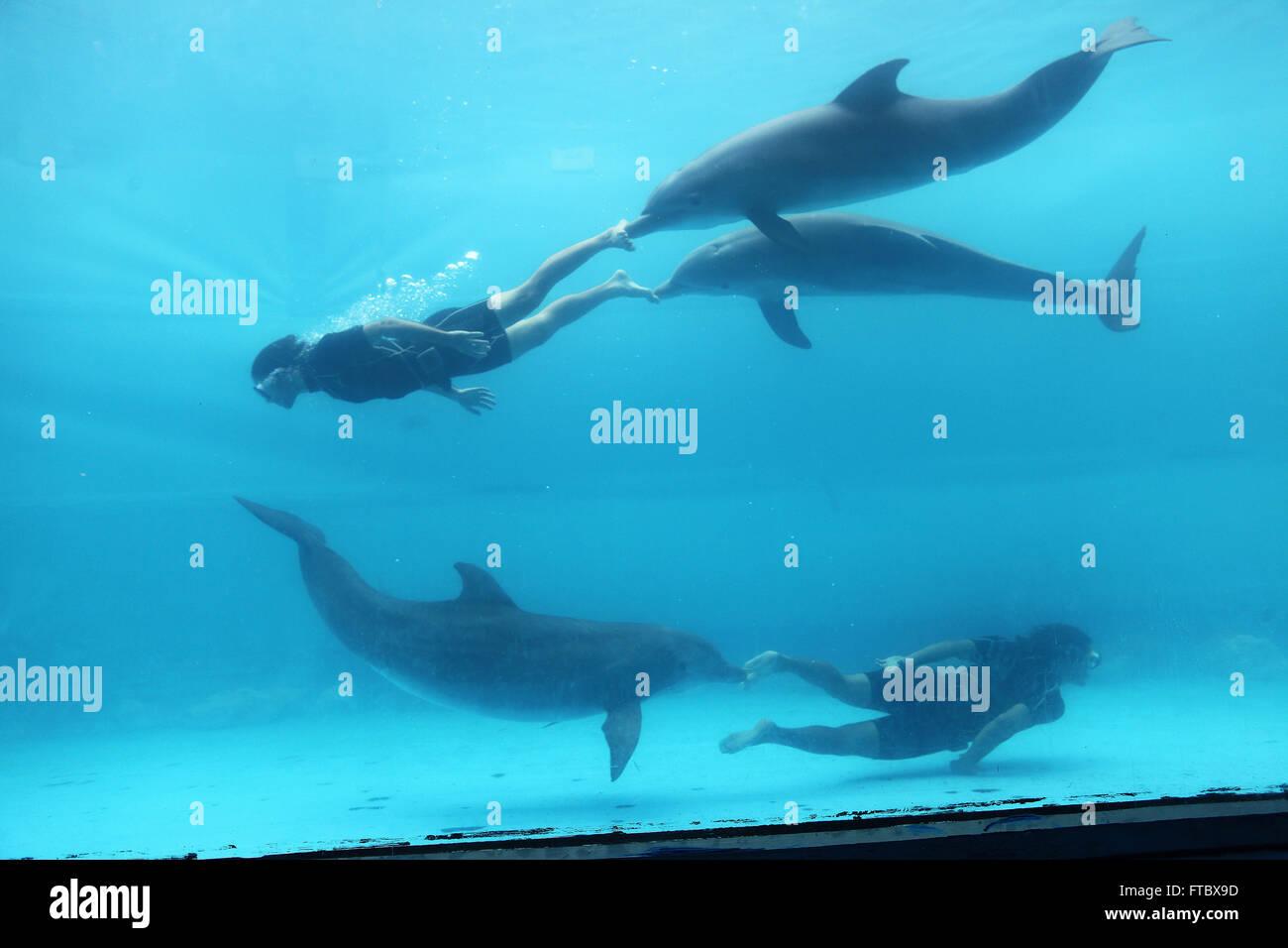Kuba - September 2011: Havanna: Acuario Nacional - das Aquarium Delphin Stockbild
