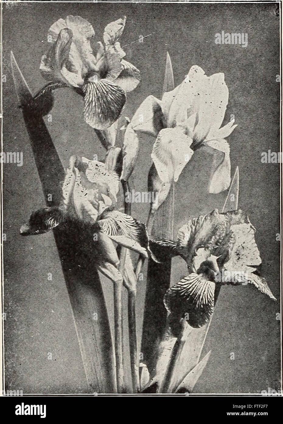 Katalog Von Beeren Pflanzen Und Weinreben Pfingstrosen, Phlox Und Andere  Stauden Pflanzen, Immergrüne Bäume, Sträuche, Reben, Heckenpflanzen, ...