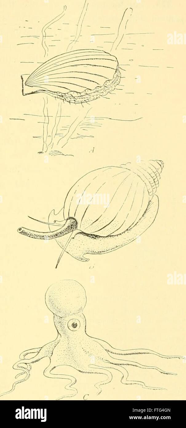 Elementarer Biologie; eine Einführung in die Wissenschaft des Lebens (1924) Stockfoto