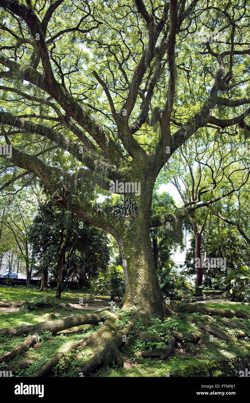 Zweig des Botanischen Gartens der Stadt Rio De Janeiro Stockbild