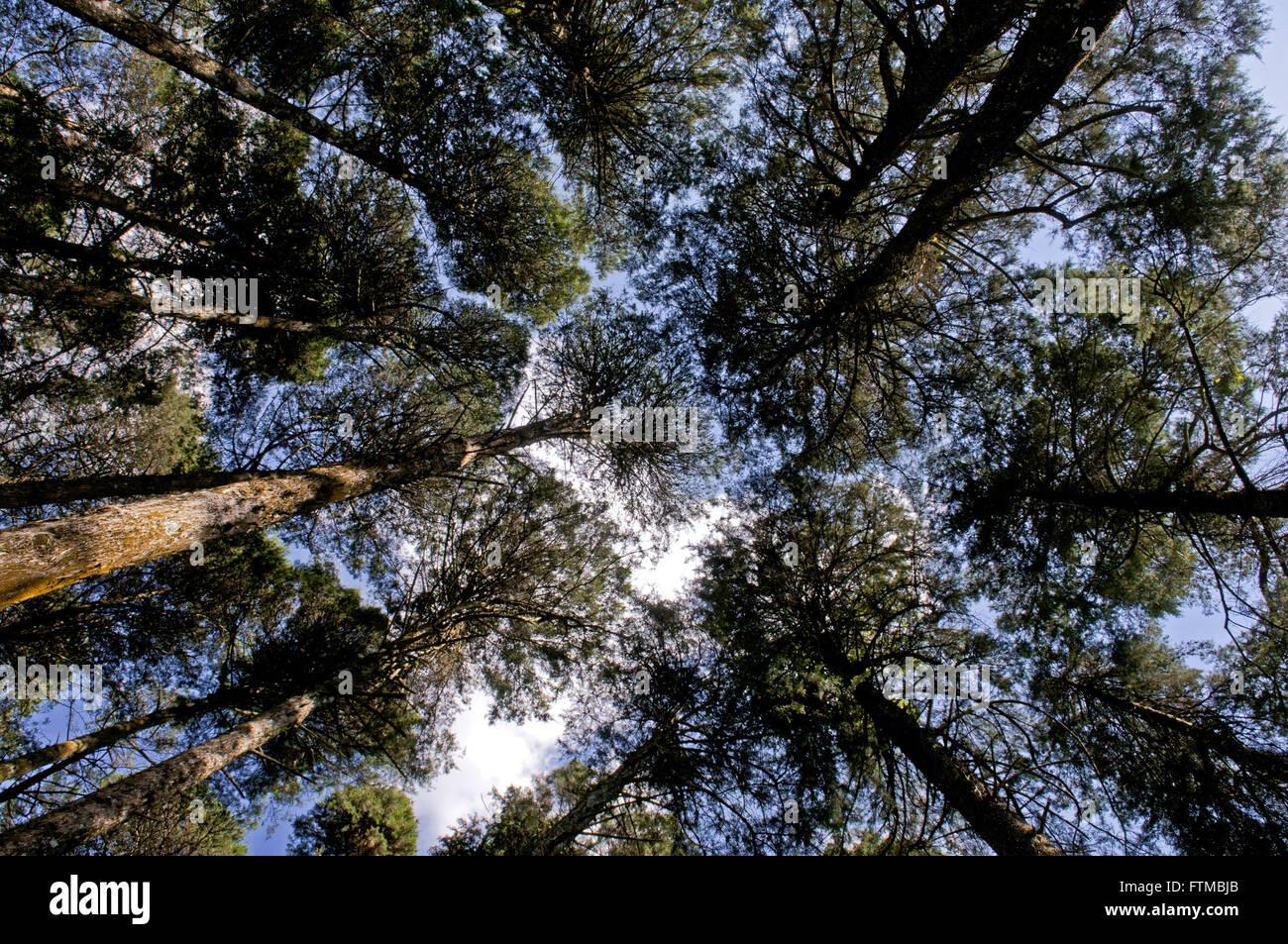 Bosque Irma Clementina im Bairro Alto Curitiba Stockbild
