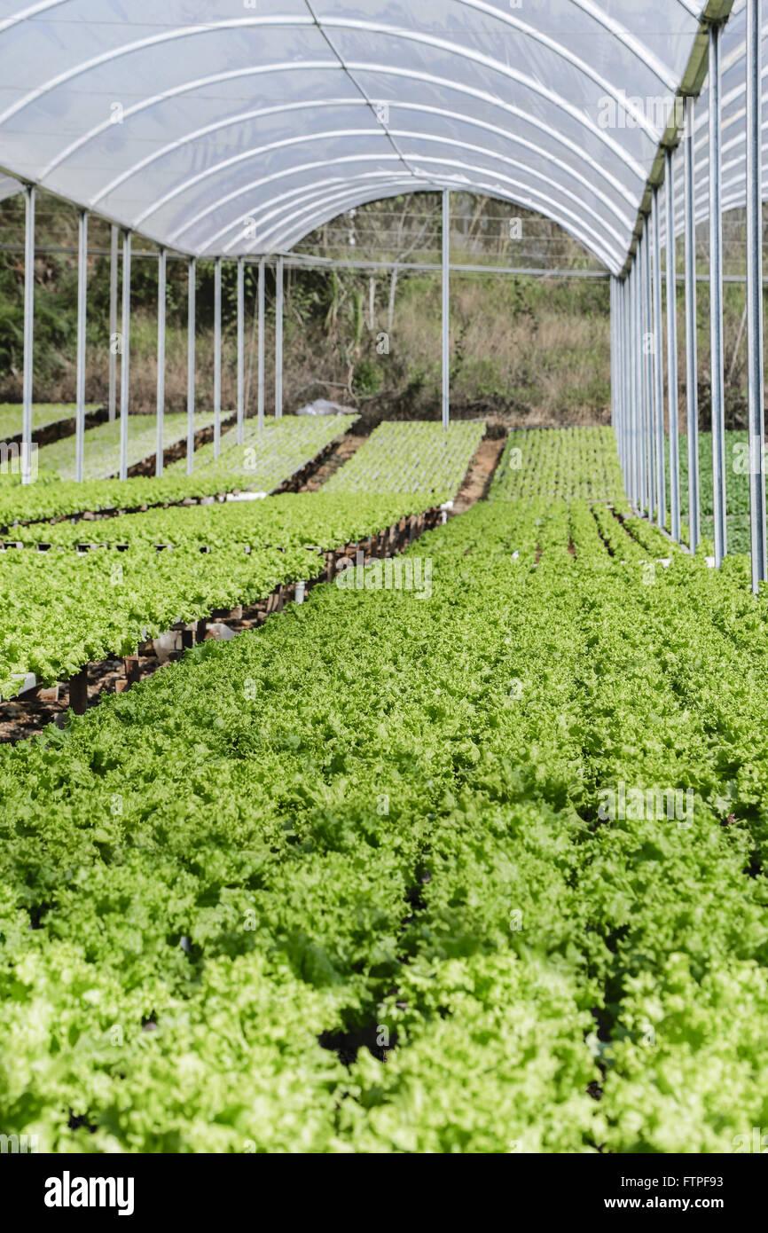 Hydroponischer Anbau Stockfotos Hydroponischer Anbau Bilder Alamy