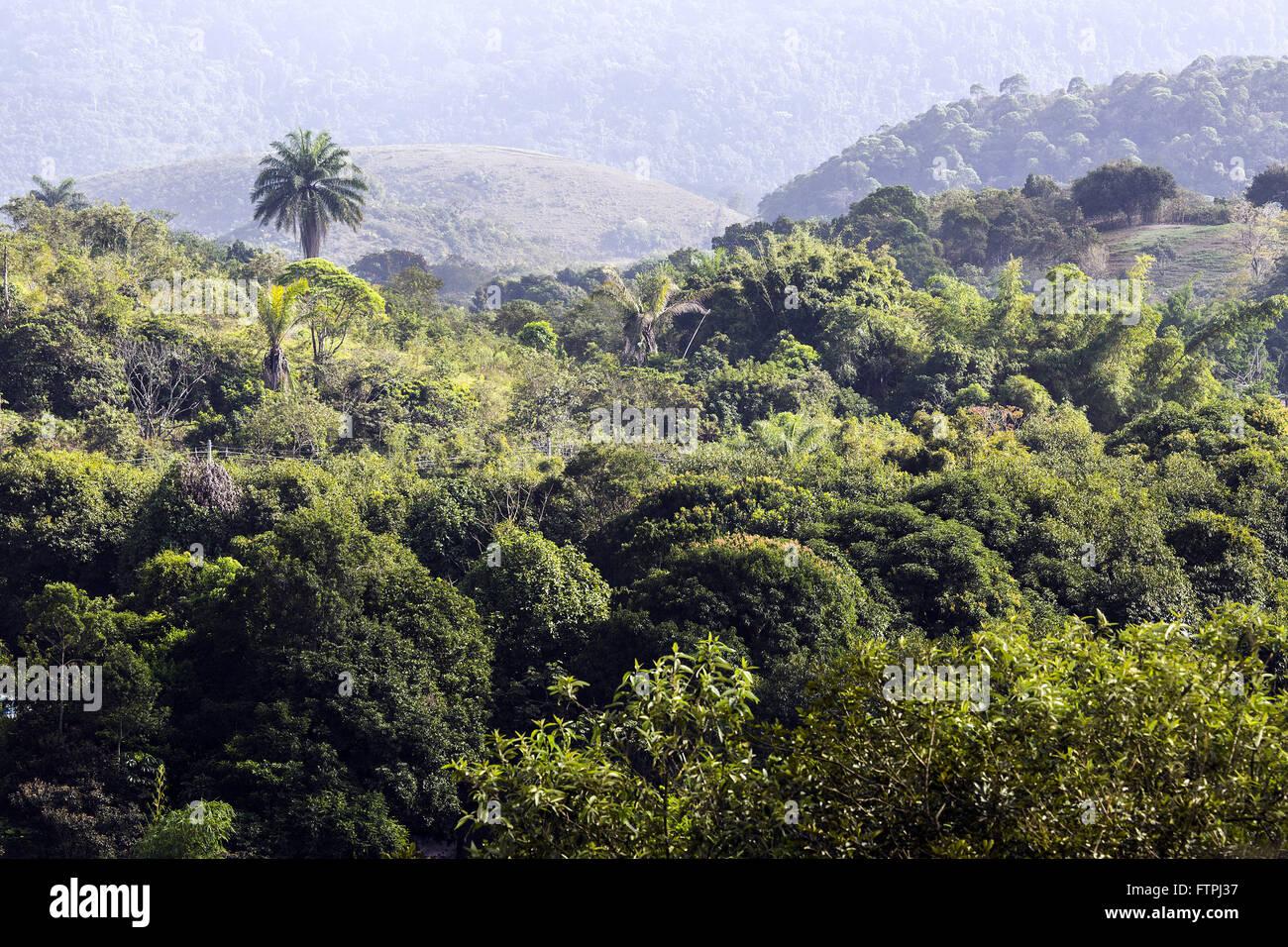 Ansicht des Regenwaldes von Friedhof unserer lieben Frau vom Rosenkranz - Cava de Vila Stockbild