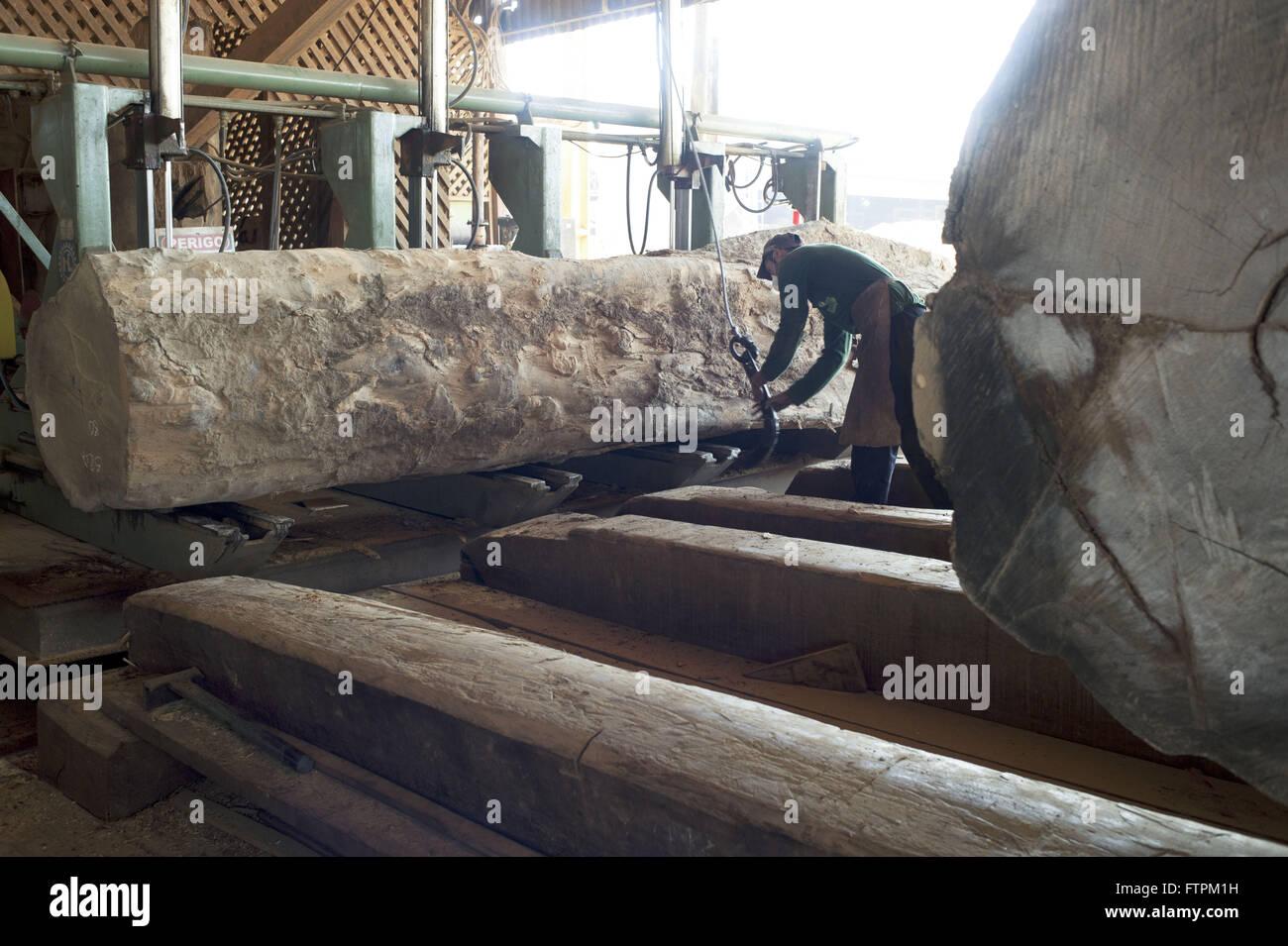 Cumaru Baum Protokolle Eisen Sagewerk Zertifiziertem Holz Zu