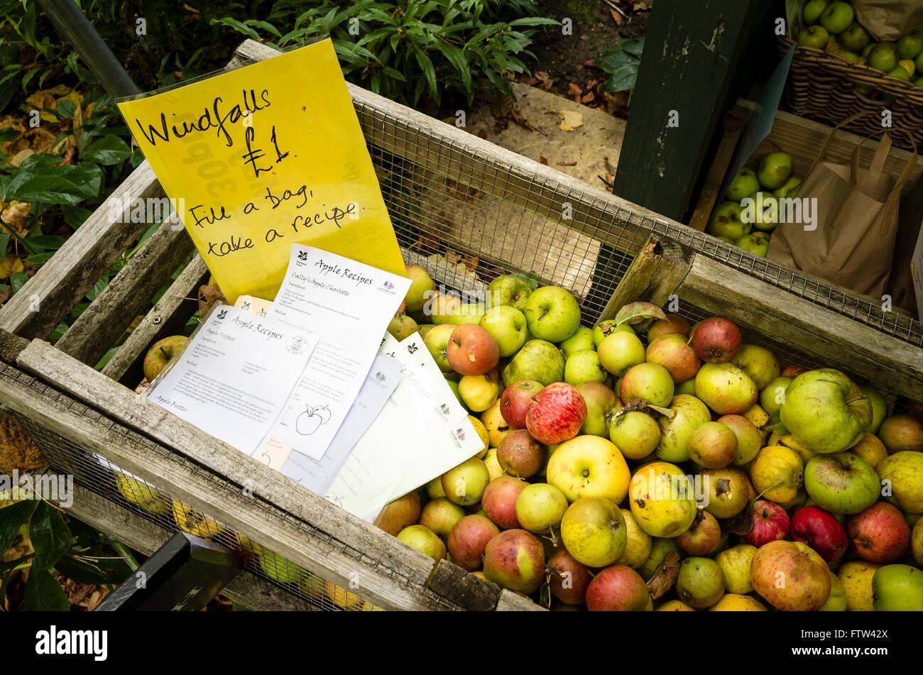 Windfall Äpfel mit vorgeschlagenen Rezepten angeboten in einem NT-Garten zur Steigerung der Mittel Stockbild