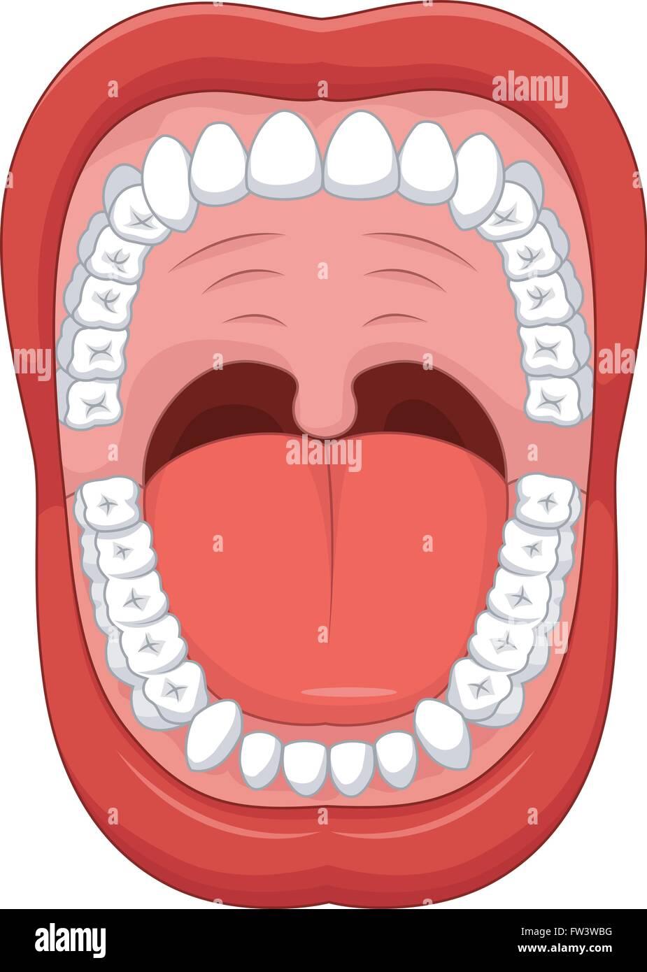 Teile des menschlichen Mund. Offenem Mund und weiße gesunde Zähne ...