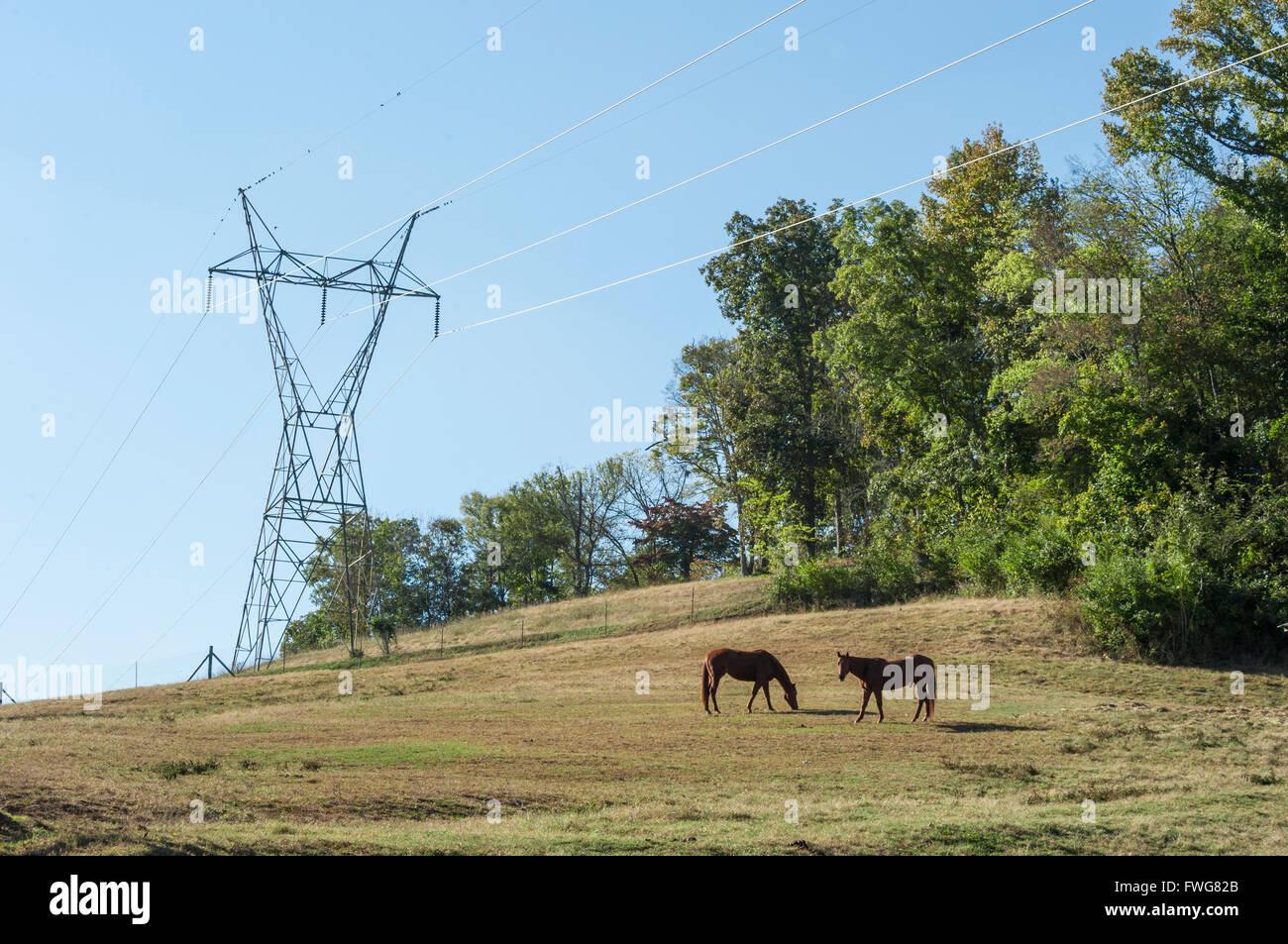Elektrische Freileitungen über pferd weide, Tennessee, USA Stockbild
