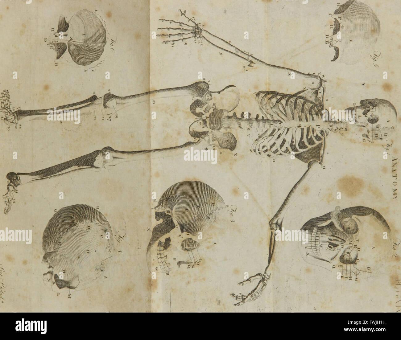 Ein compendious System der Anatomie - 6-teilig - Teil I - Osteologie ...