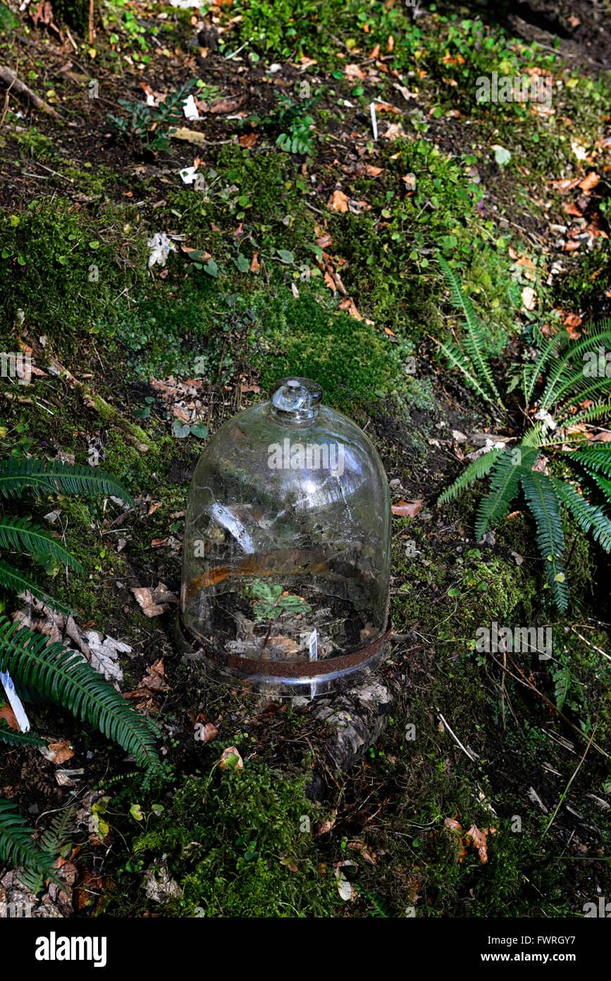 Lovely Cloche Holz Wald Glasabdeckung Für Zarte Frost Zarte Pflanze Pflanzen  Schützen Schutz Garten Gartenarbeit Stockbild