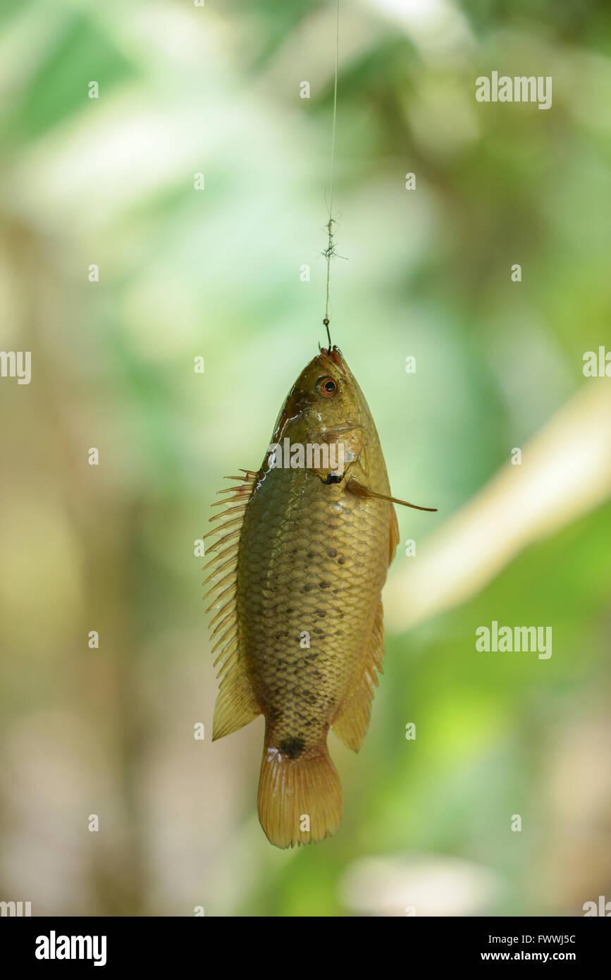 Geh Fisch Datierung