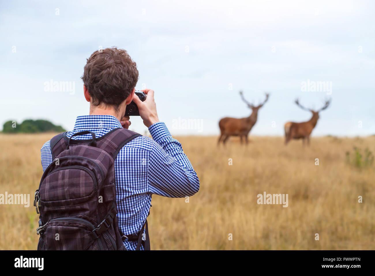 Fotografen Fotografieren von Wildtieren, Mann mit Kamera und zwei Hirsche in der Natur Stockbild