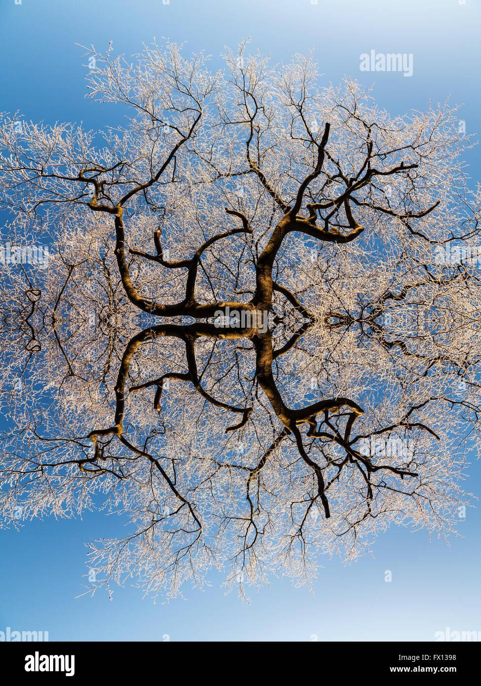 Ein Kahler Baum bedeckt in Frost, spiegelt sich in der Postproduktion für einen surrealen Effekt Stockbild