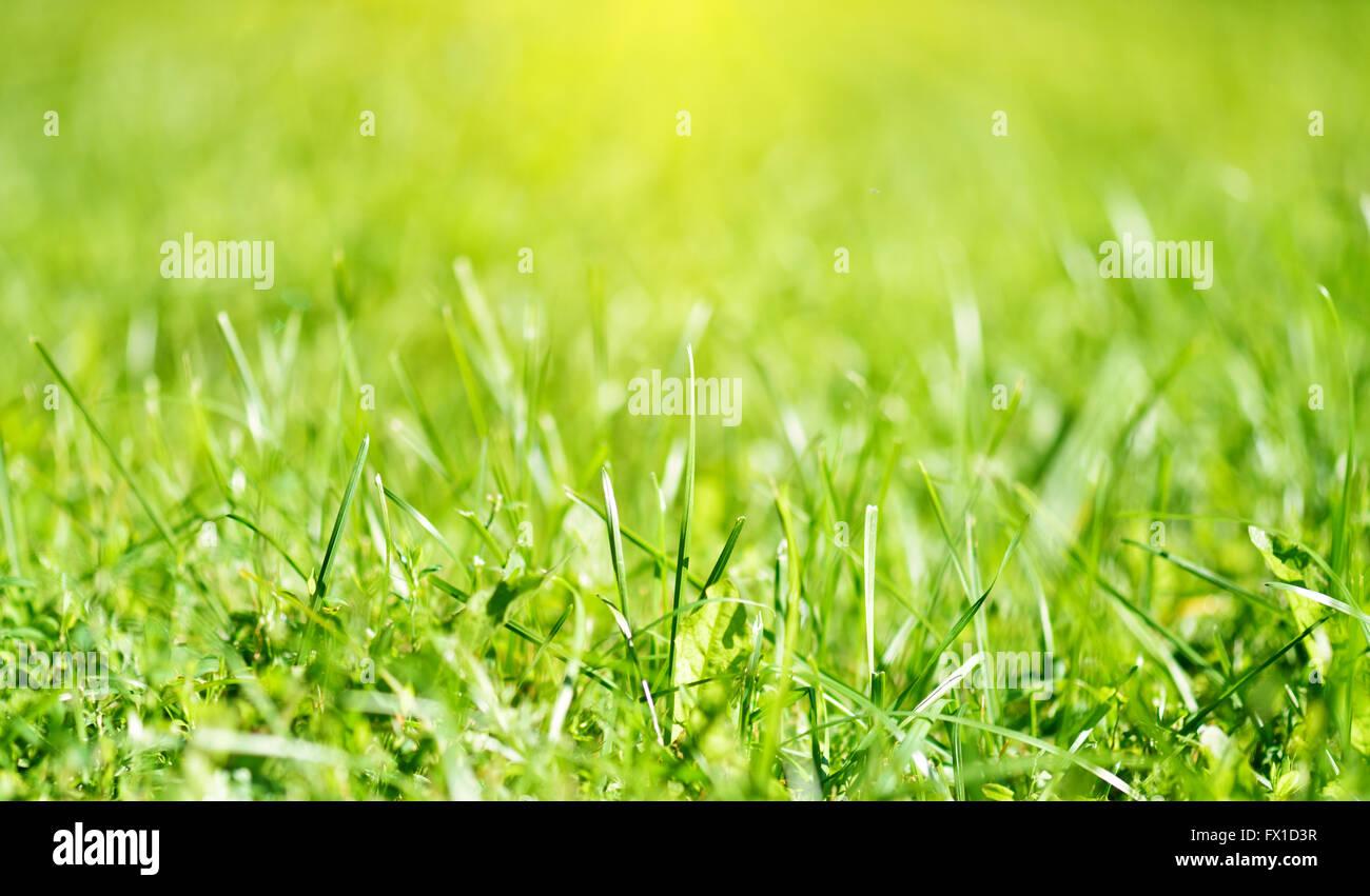 Frühling natürliche Hintergründe Rasen Stockbild
