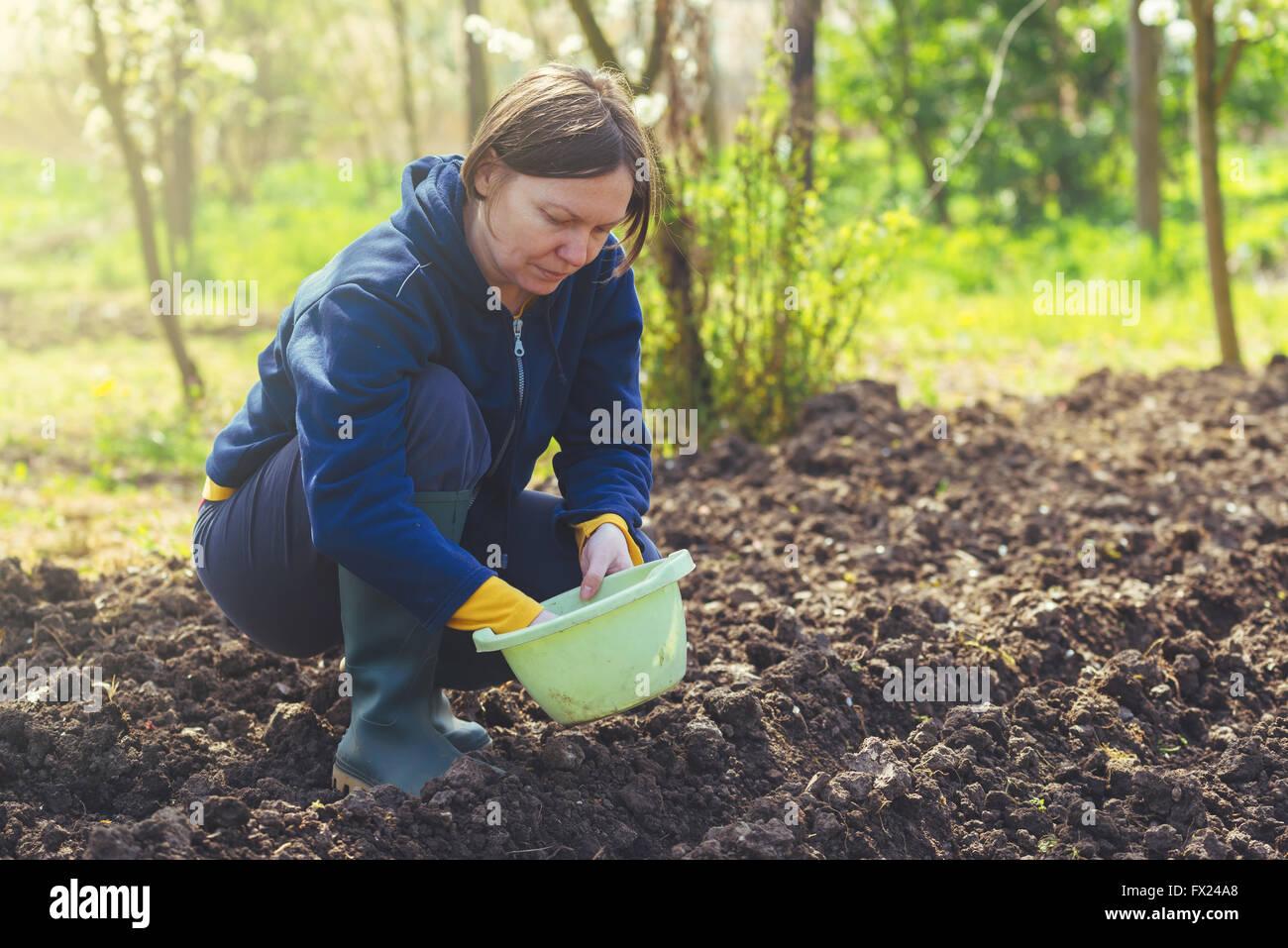 Frau seeding Zwiebeln in Bio-Gemüsegarten, junge Erwachsene weibliche Pflanzen Samen in den Ackerboden. Stockbild