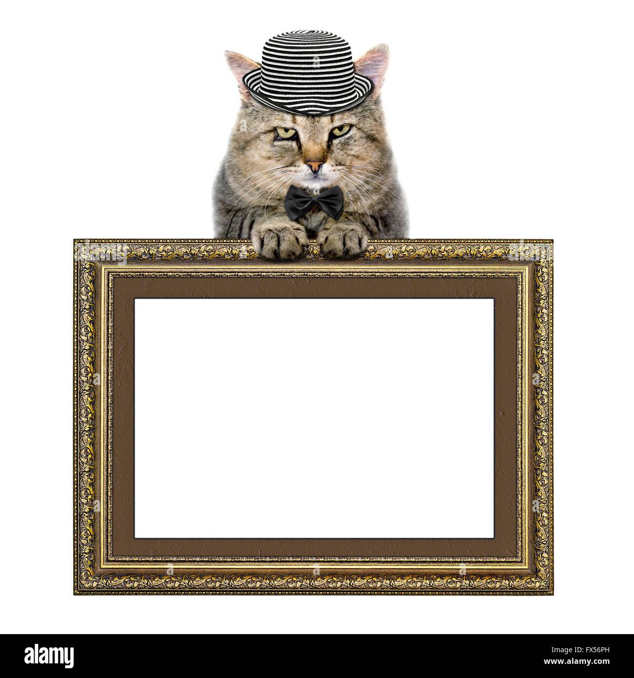 Katze in einen Hut und Krawatte Schmetterling stützt sich auf den ...