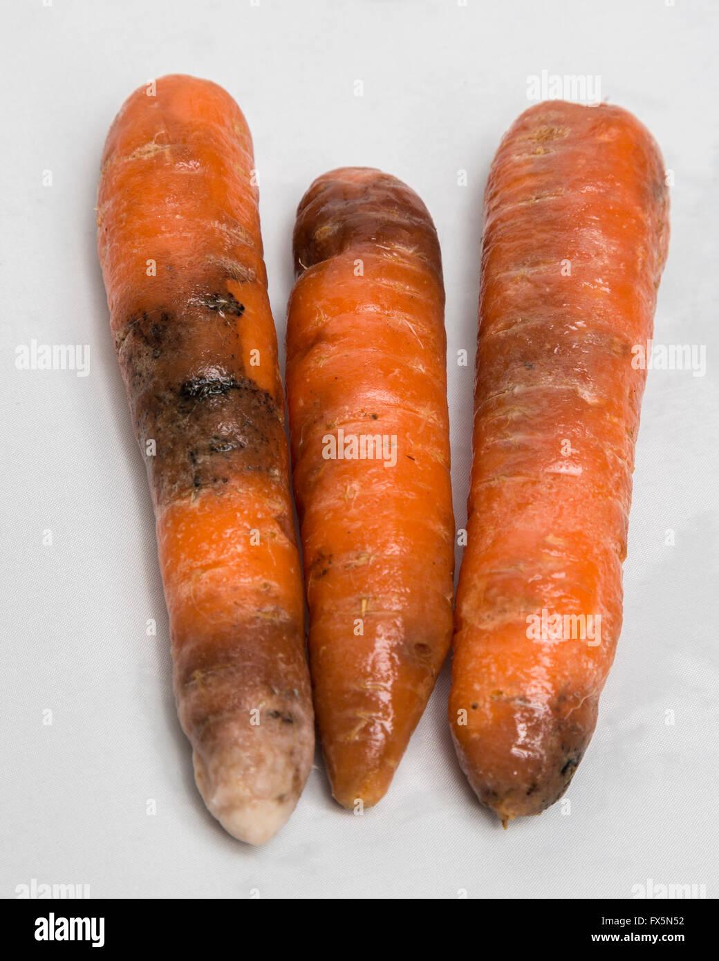 Black Carrots Food Poisoning