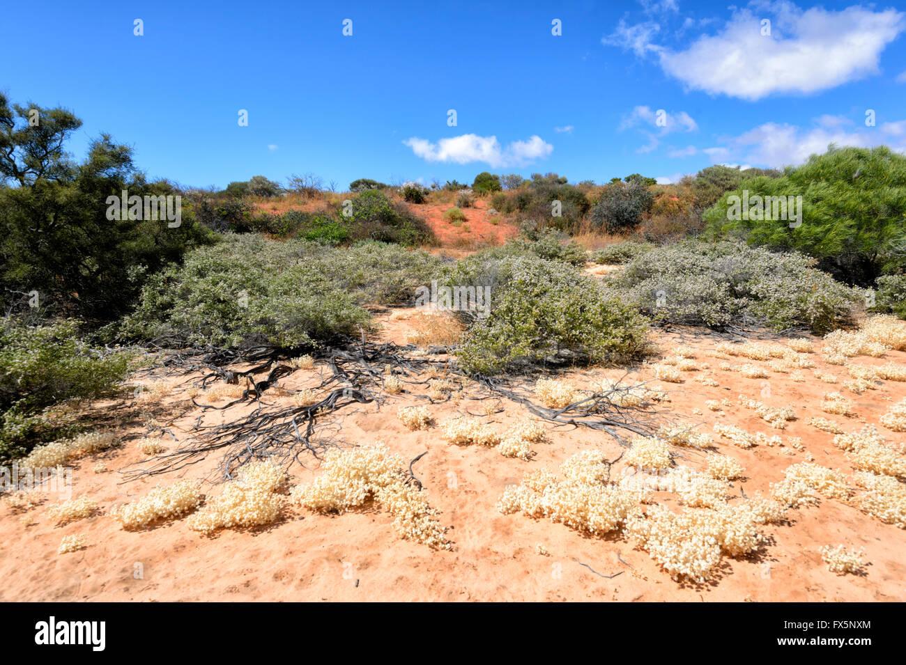 Vegetation der Nordwestküste von Western Australia, Australien Stockbild