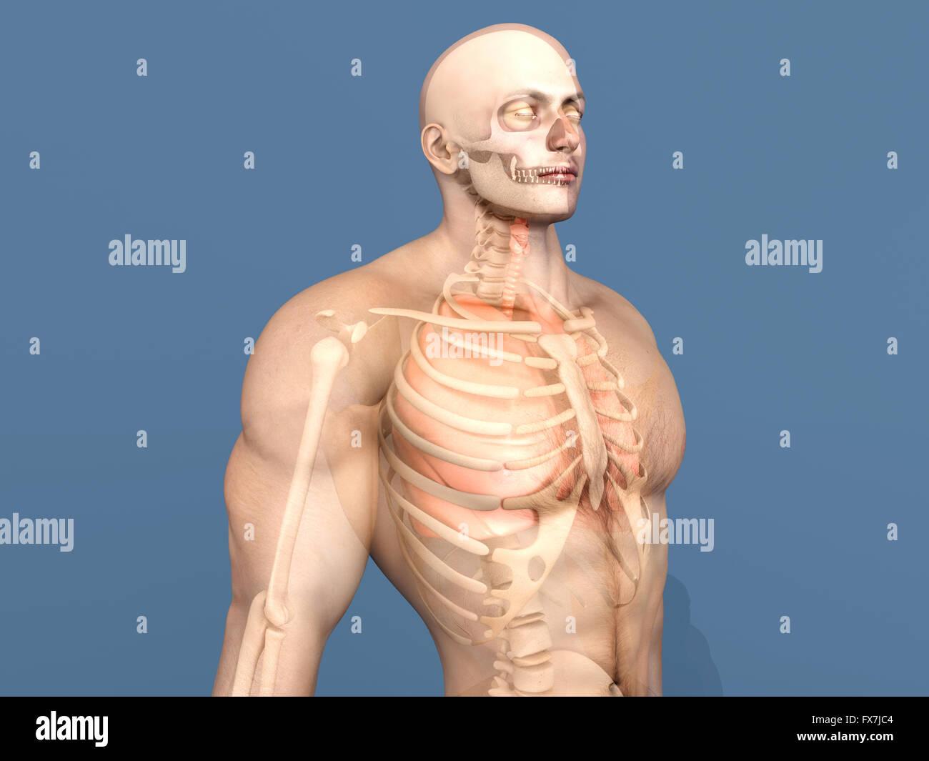 Großzügig Grundlagen Der Menschlichen Anatomie Und Physiologie 8 ...