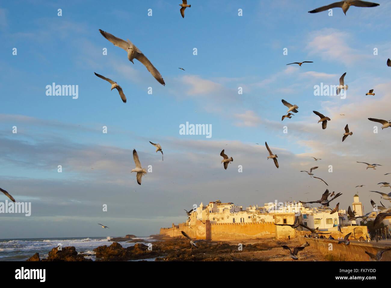 Marokko, Medina, Essaouira, Atlantikküste Stockbild