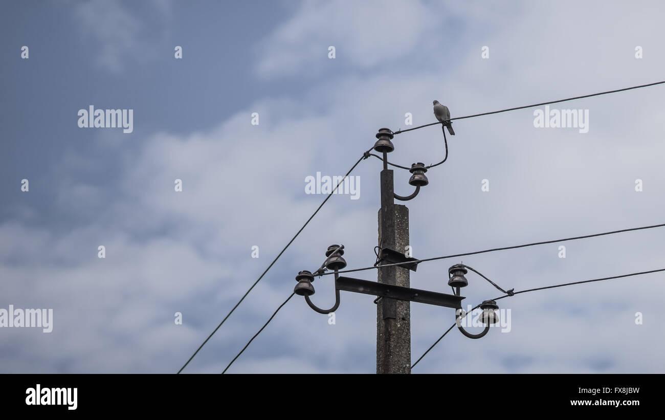 Taube auf elektrischer Draht Stockfoto, Bild: 102222957 - Alamy