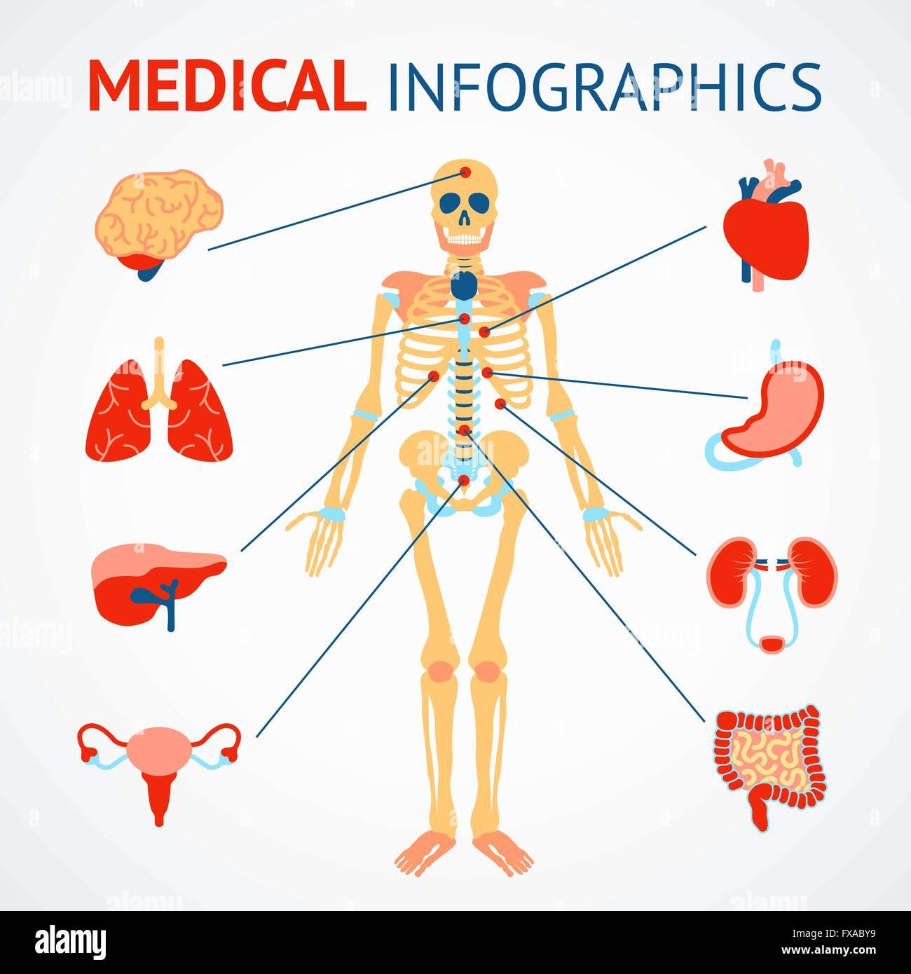 Erfreut Organ Platzierung Im Körper Bilder - Menschliche Anatomie ...