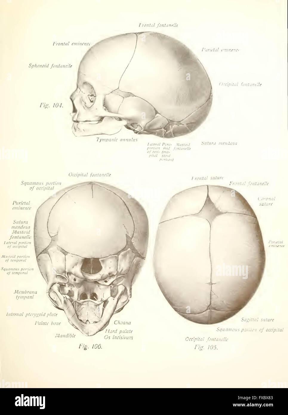Atlas und Lehrbuch der menschlichen Anatomie von Sobotta, Johannes ...