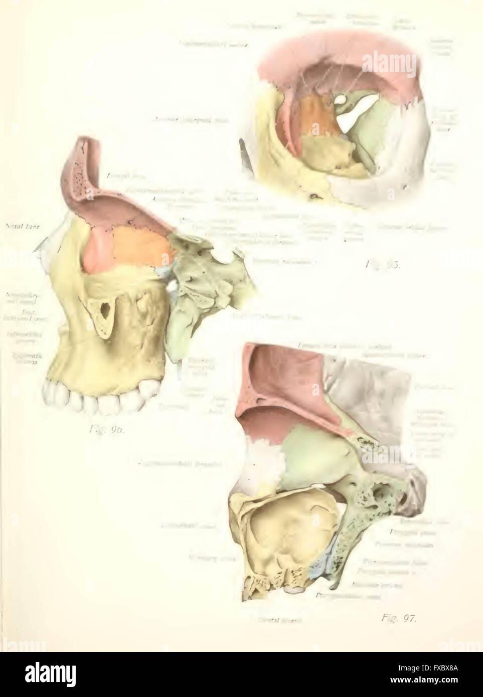 Großartig Menschliche Anatomie Lehrbücher Fotos - Anatomie Ideen ...