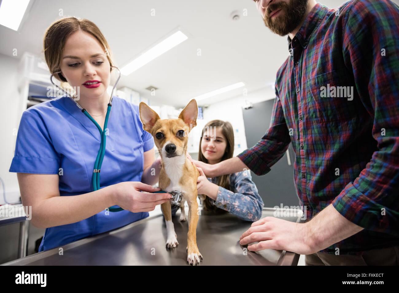 Tierarzt untersuchen Hund mit seinem Besitzer Stockbild