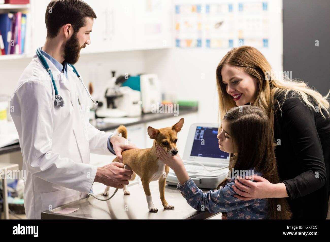 Tierarzt untersucht einen Hund mit seinem Besitzer Stockbild