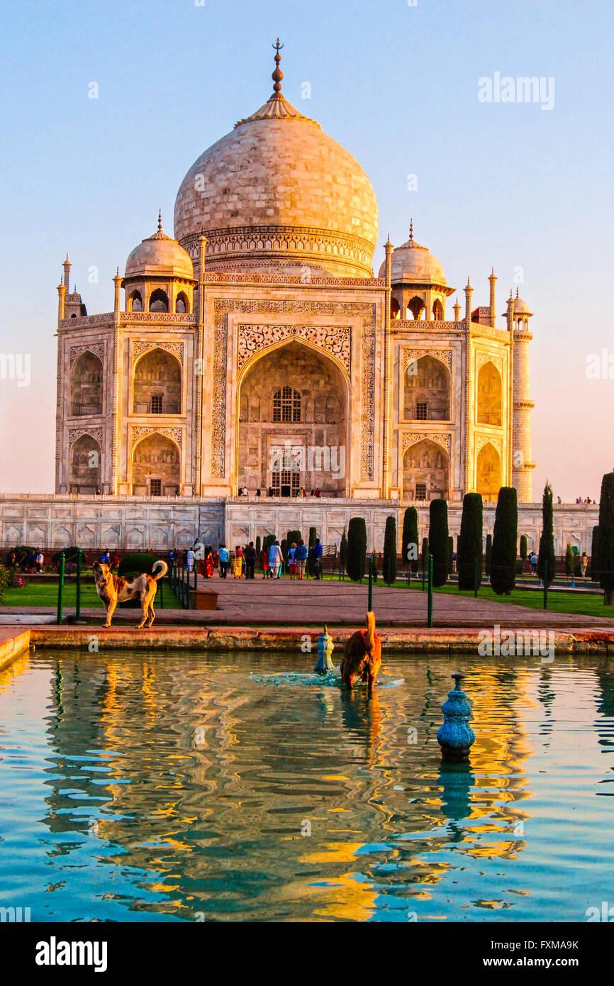 Das Taj Mahal, Agra, Uttar Pradesh, Indien. Stockbild