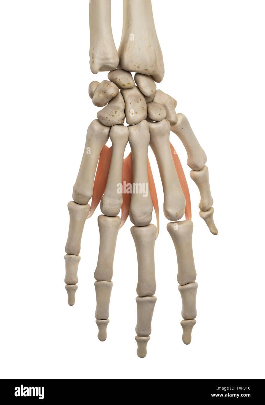 Gemütlich Anatomie Der Hand Nerven Bilder - Anatomie Von ...