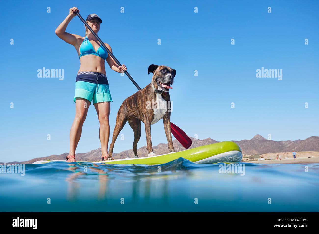 Paddleboarden Frau mit Hund Stockbild