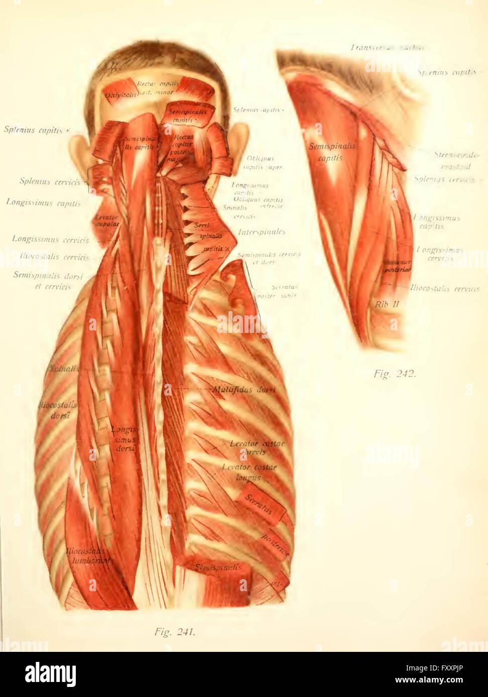 Charmant Menschliche Anatomie Und Physiologie Online Lehrbuch Bilder ...