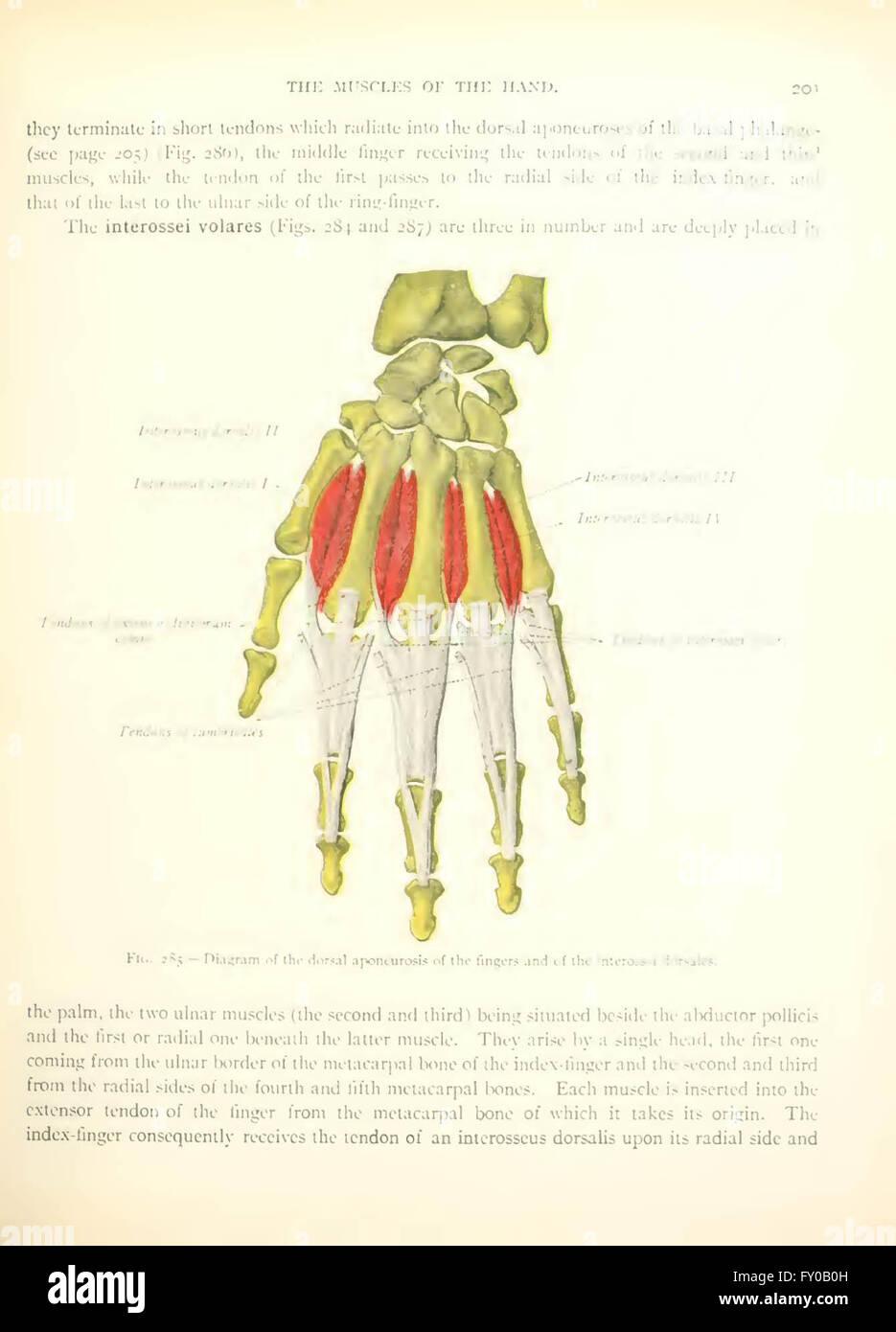 Fein Menschliche Anatomie Lehrbuch Galerie - Anatomie Ideen ...