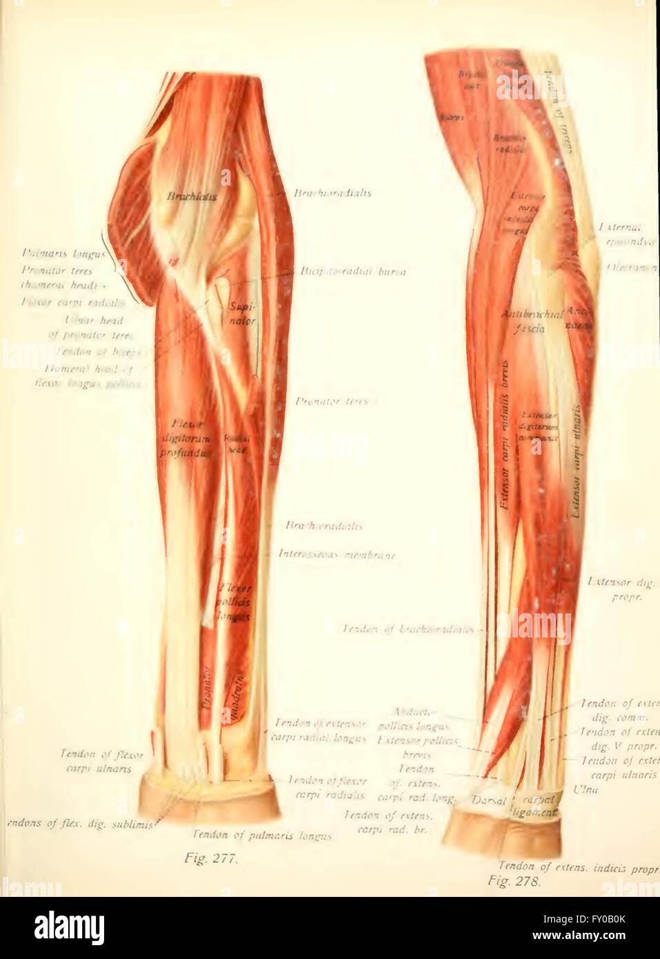 Ungewöhnlich Menschliche Anatomie Und Physiologie Atlas Ideen ...