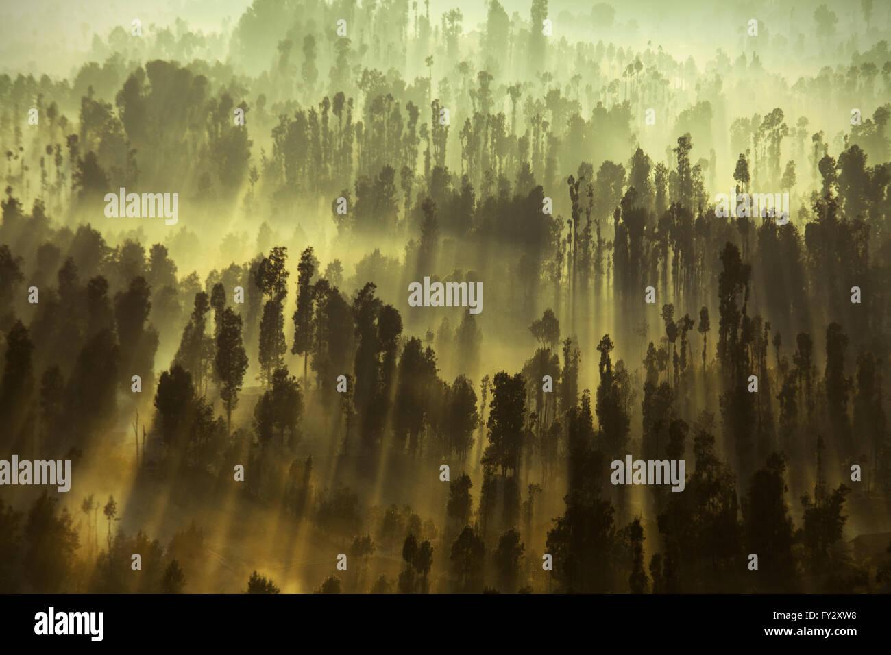 Nebligen Morgen im Waldgebiet des Gunung bromo bei Tagesanbruch in den Bergen mit Sonnenstrahlen durch die Bäume Stockfoto