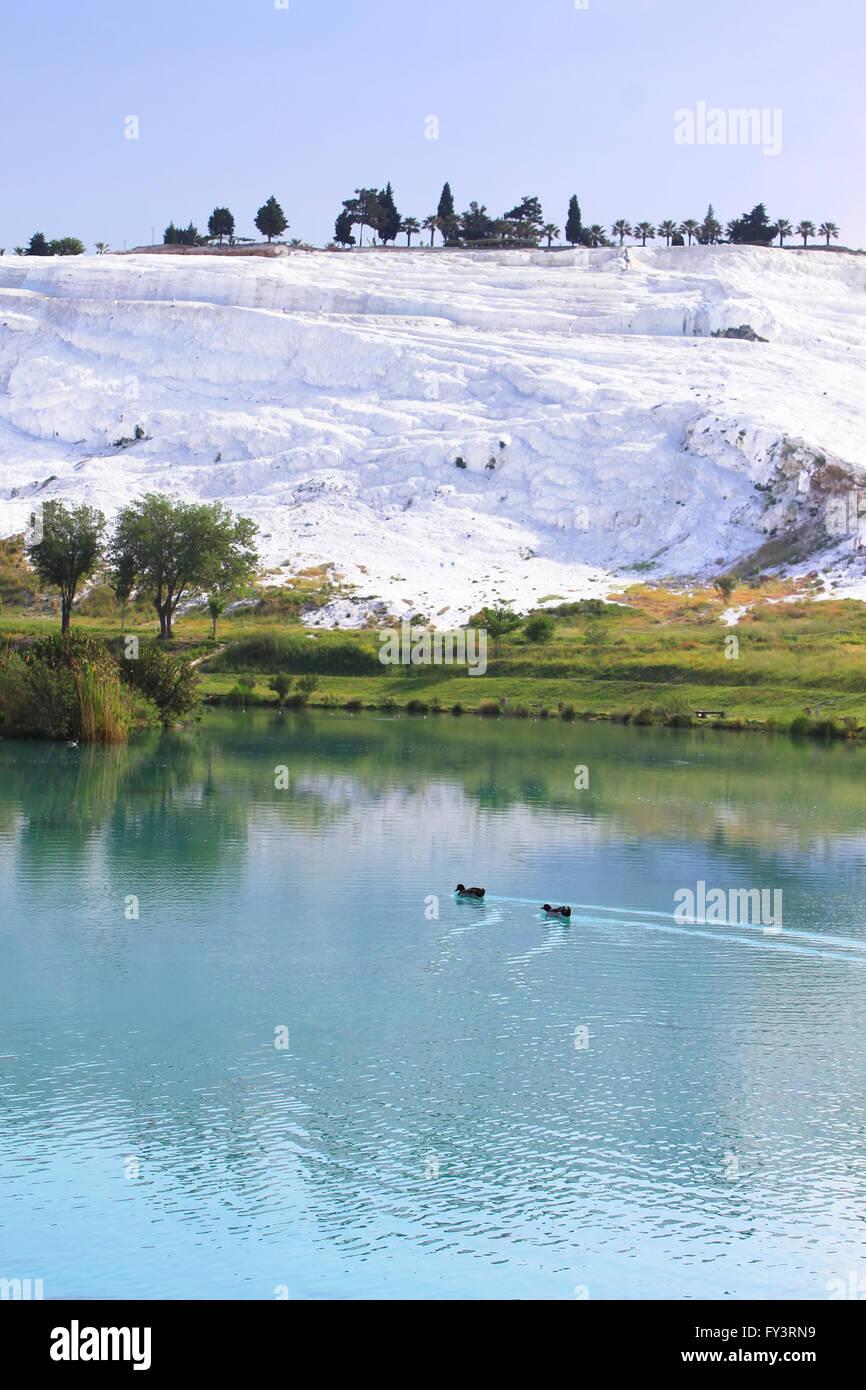 Enten auf dem See, verkalkt, Kalkstein-Terrassen im Hintergrund, Pamukkale, Türkei Stockbild