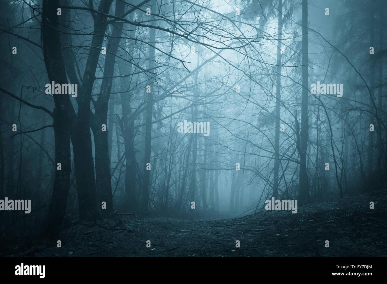 Dunklen Wald im Nebel bei Nacht Stockfoto, Bild: 102811932 ...