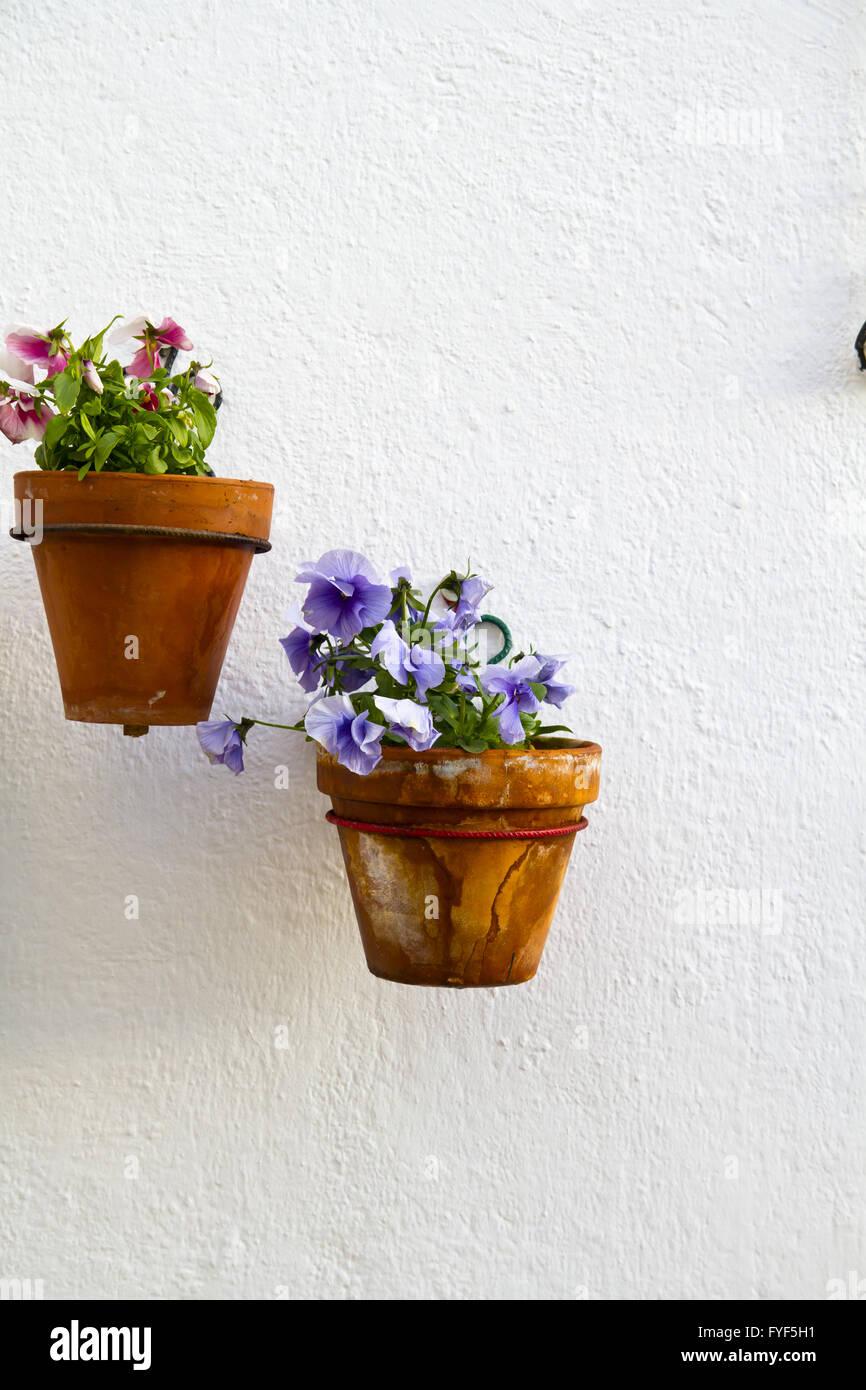 Spanische Wand mit schönen Pflanzen. Andalusische Blumentopf ...
