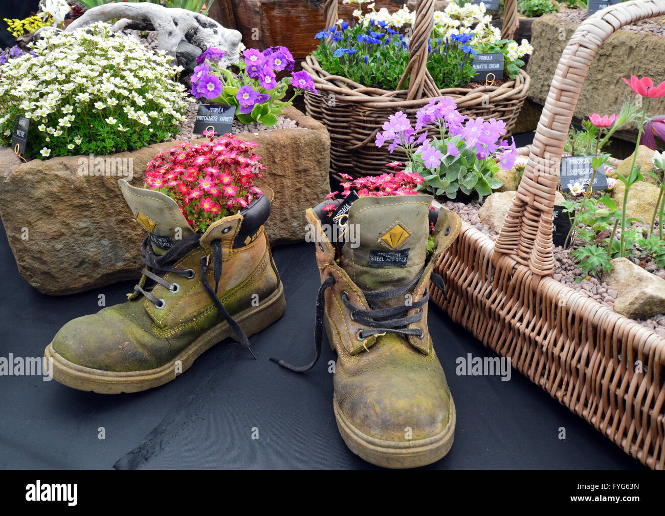 planted flowers in boots stockfotos planted flowers in boots bilder alamy. Black Bedroom Furniture Sets. Home Design Ideas