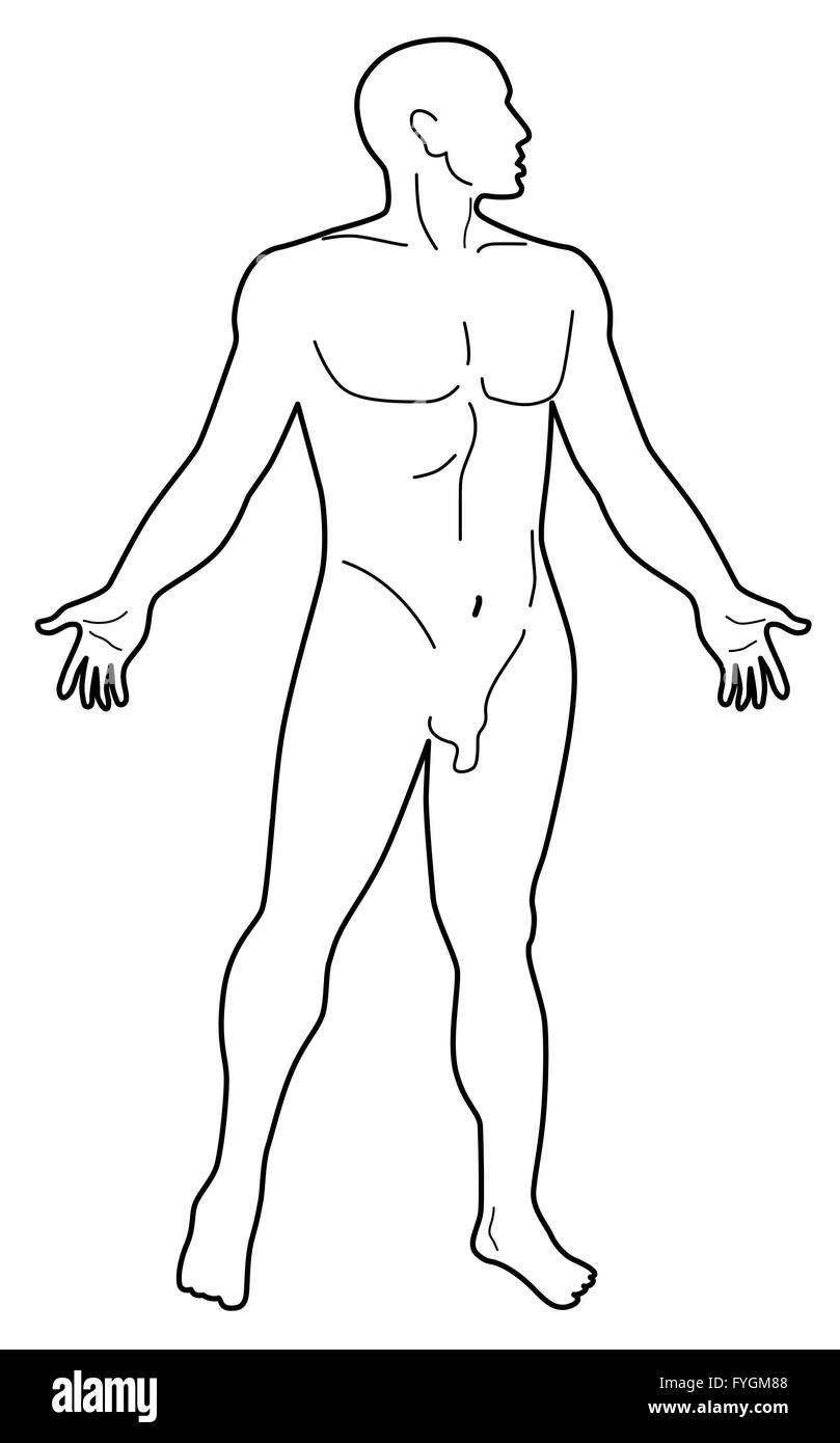 Fantastisch Männlich Menschliche Anatomie Bauch Bilder - Physiologie ...