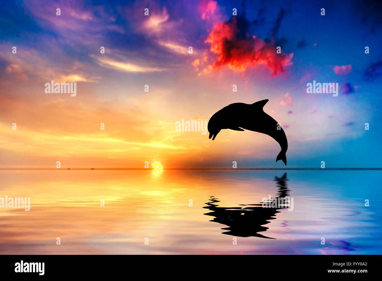 dolphin tail stockfotos dolphin tail bilder alamy. Black Bedroom Furniture Sets. Home Design Ideas