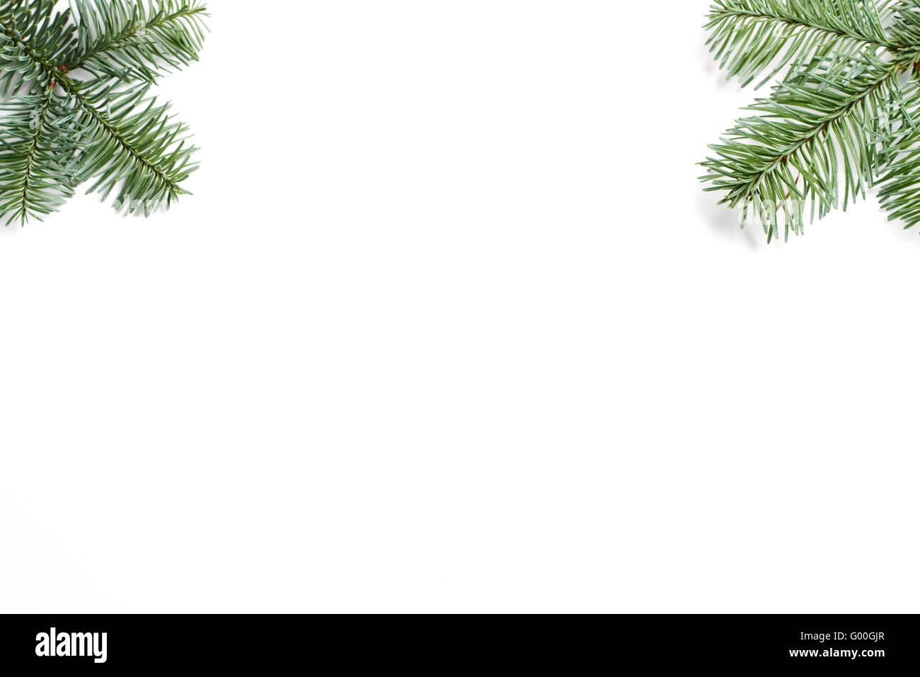 Rahmen von zwei Tannenzweigen an der Ecke isoliert auf weißem Hintergrund Stockbild