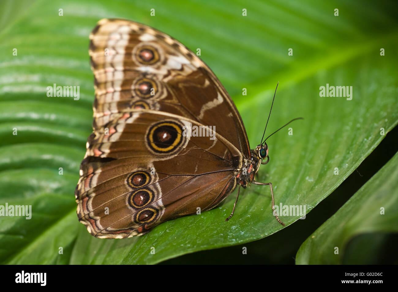 Schmetterling auf einem Blatt Stockbild