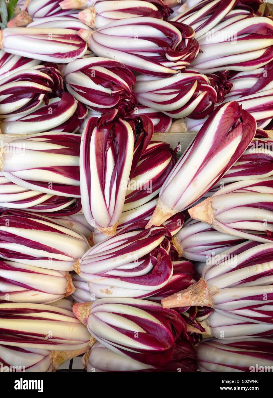 Treviso Salat
