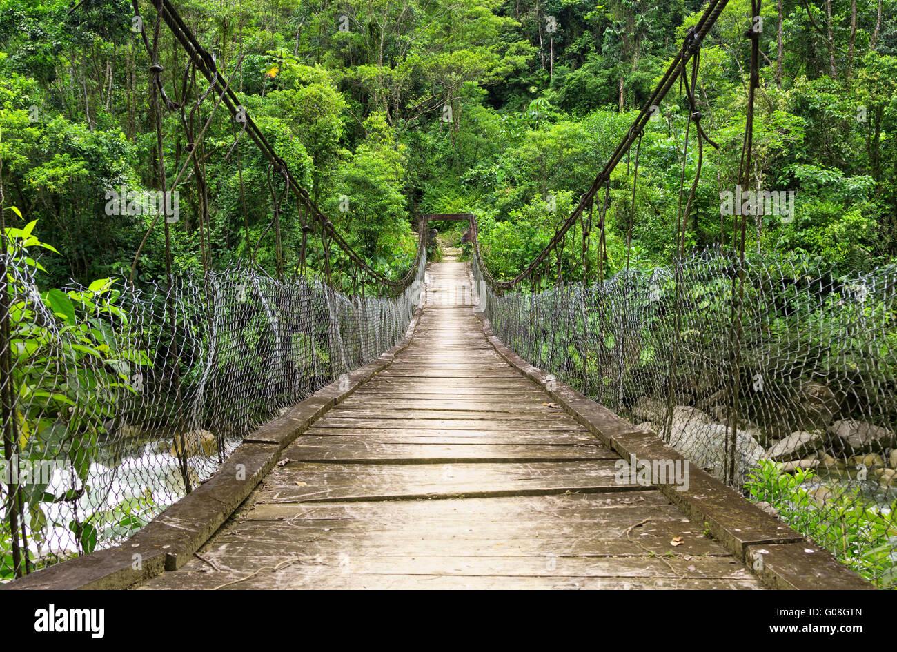 Dschungel Englisch
