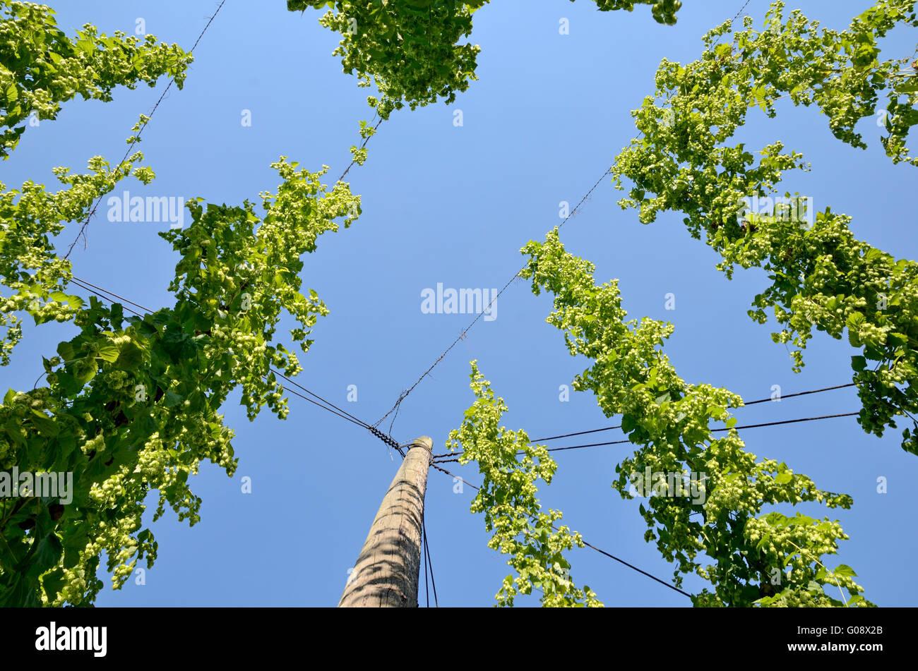 Kletterdraht Stockfotos & Kletterdraht Bilder - Alamy