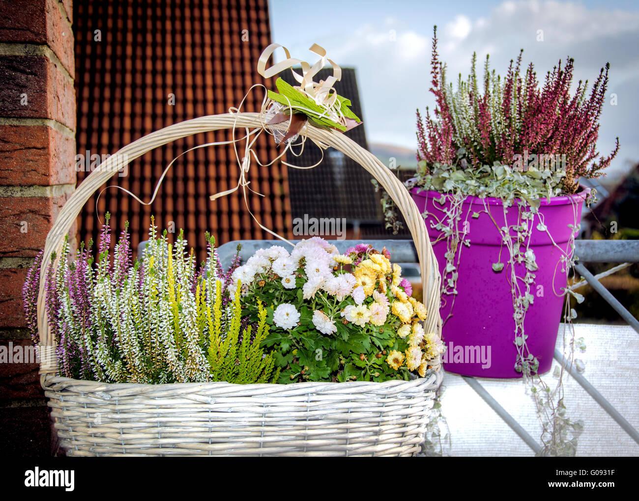 Herbst Blumen Auf Dem Balkon Stockfoto Bild 103462171 Alamy